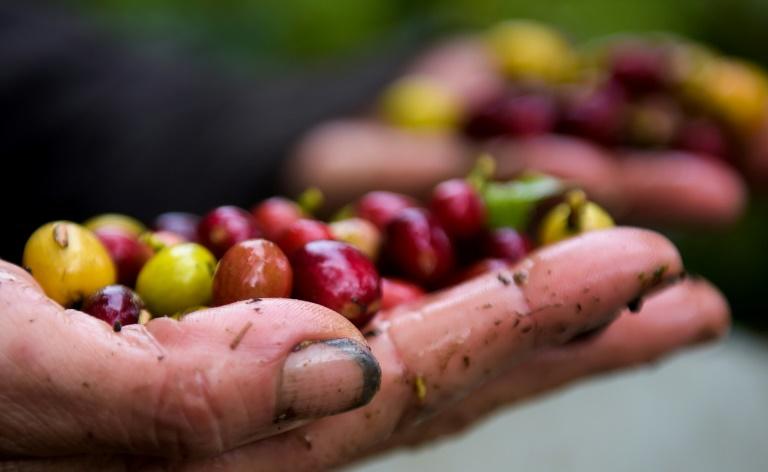 Café sofre com comércio pouco justo em período de crise