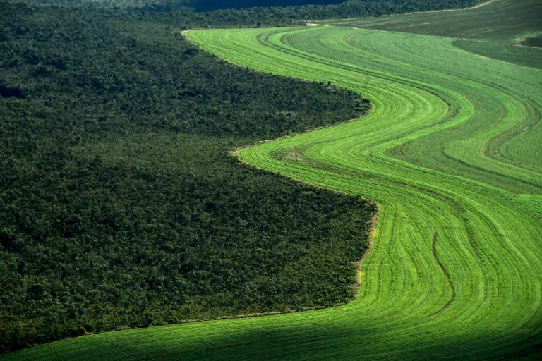 Cerrado brasileiro recua diante da soja e do gado