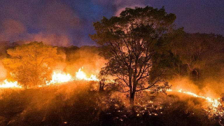 Crédito: Projeto Solos/ AFP