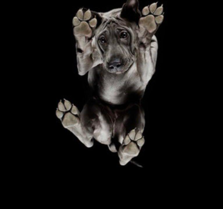Pets viram arte ao serem fotografados de forma inusitada