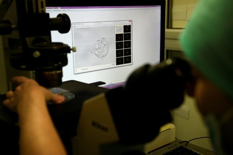 Cientistas defendem a permissão de pesquisas com embriões com mais de 14 dias