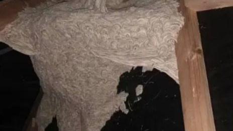 """Mulher se assusta com """"ninho gigante"""" em sótão de casa na Nova Zelândia"""