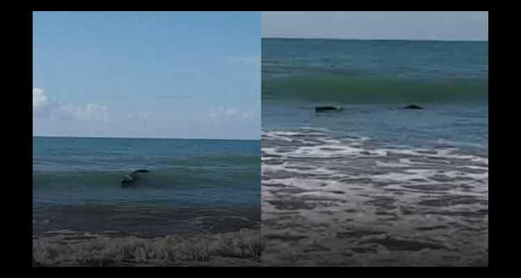 """Vídeo: Pescador vê """"tronco"""" flutuando no mar e fica surpreso ao descobrir que era um crocodilo"""