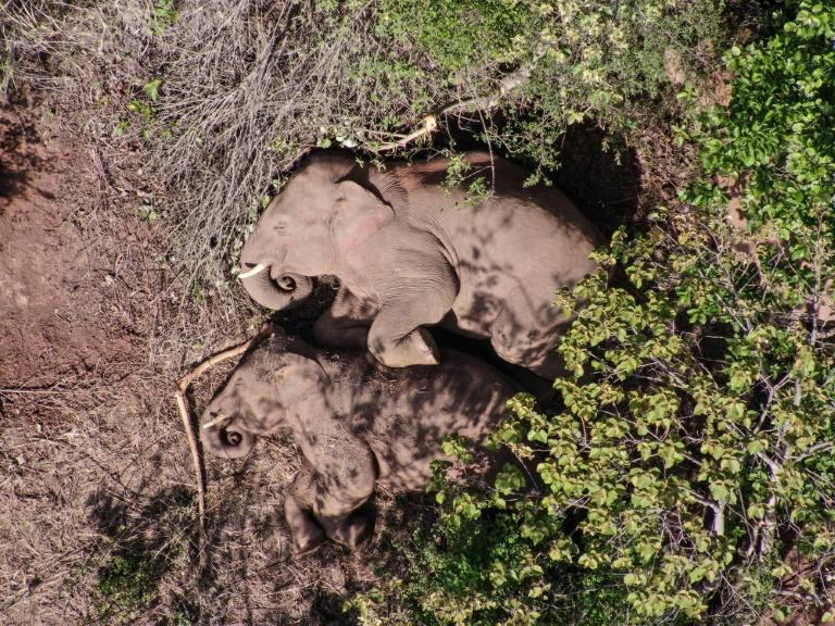 Veterinários curam filhote de elefante ferido e abandonado pela sua manada na China