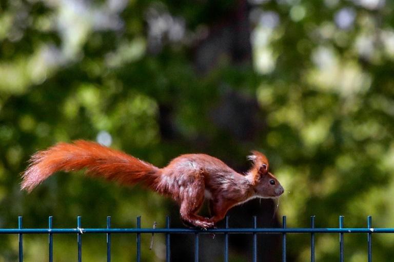 Acrobatas, esquilos se movem fazendo parkour, revela estudo
