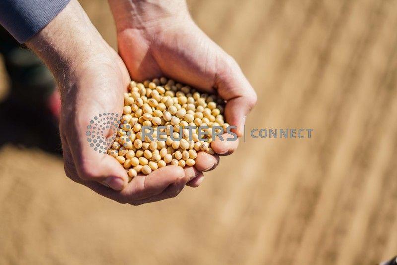 Importações de soja pela UE somam 1 mi t no 1º mês do ano comercial