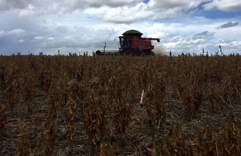 Anec projeta salto na exportação de soja do Brasil para 94,3 mi t