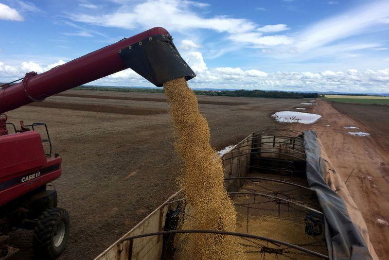 China compra até 6 cargas de soja do Brasil para outubro/novembro, dizem traders