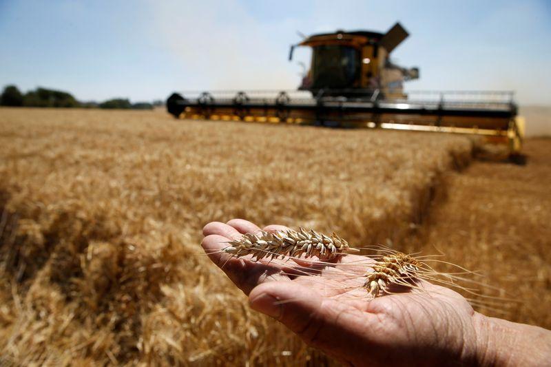 Rússia deve plantar menos trigo de inverno para safra de 2022, dizem analistas