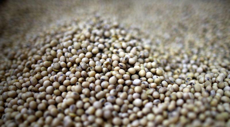 Agricultores argentinos venderam 30,5 mi t de soja em 2020/21, diz governo
