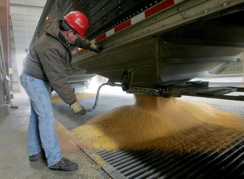 Milho recua de pico de 4 semanas com avanço na colheita dos EUA e dólar forte