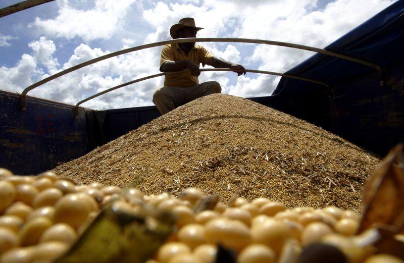 Plantio de soja avança para 6,16% das áreas em MT com chuvas favoráveis, diz Imea