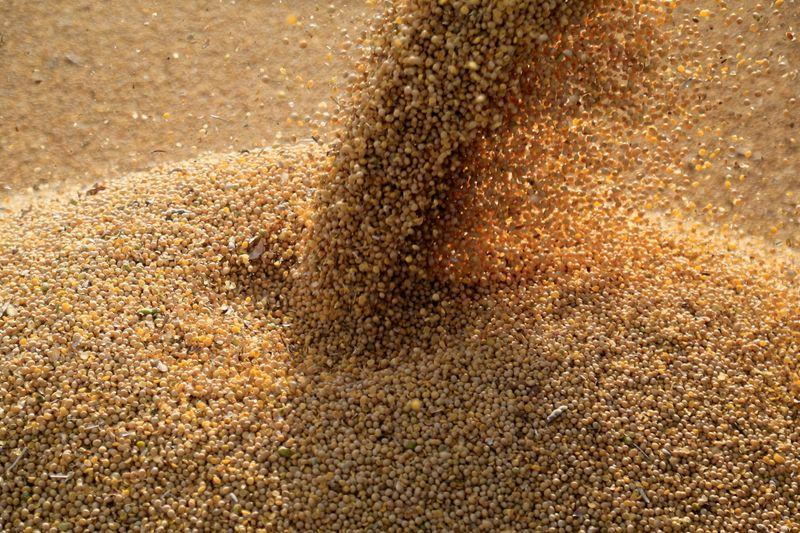 Ritmo de exportação de soja do Brasil indica novo recorde em maio