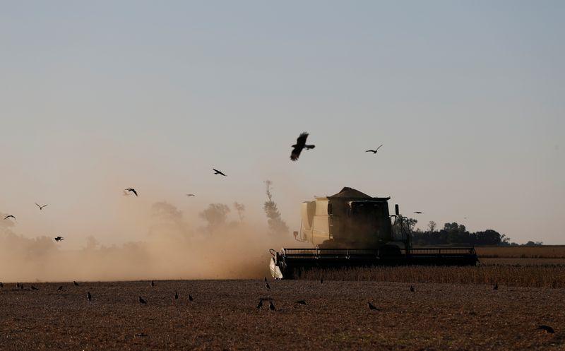 Vendas de soja 2020/21 da Argentina alcançam 21,8 mi t, diz o governo