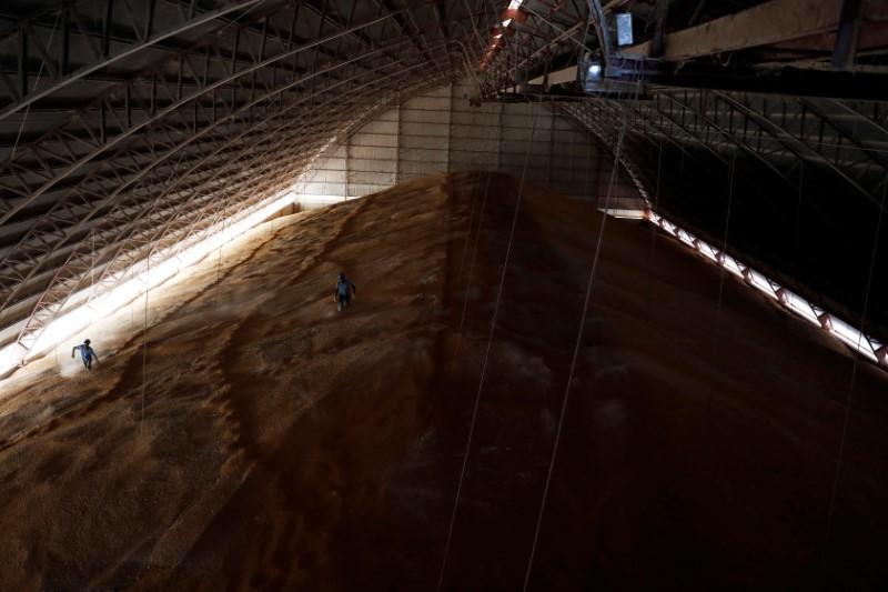 Sul-coreana MFG compra 136 mil t de milho, dizem operadores