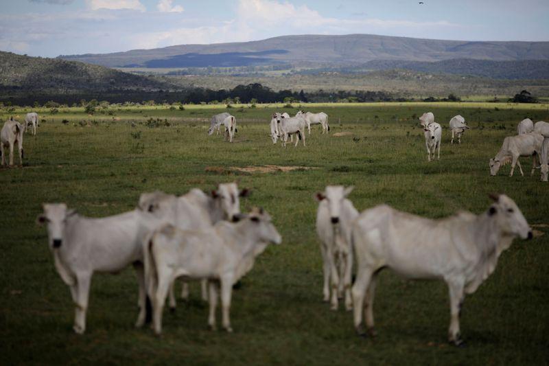Brasil deve propor nova lei para rastrear pecuarista e limitar desmatamento