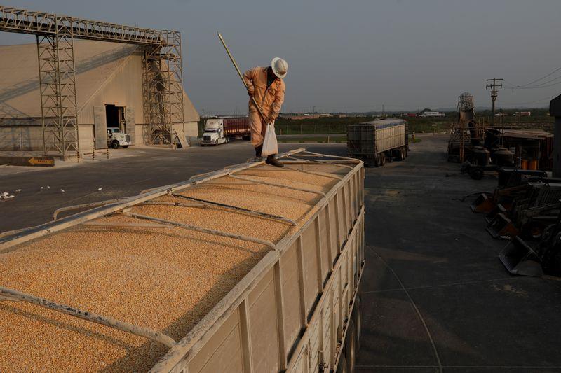 Segunda safra de milho do Paraná cai abaixo de 10 mi t por seca, prevê Deral
