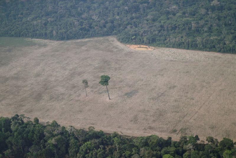 A política destrutiva de Bolsonaro em Rondônia
